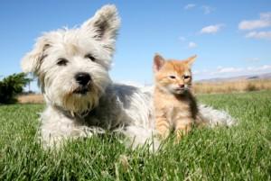 pet accommodation gold coast