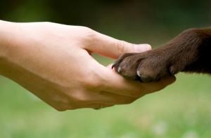 dog training gold coast