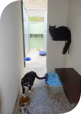 cattery gold coast boarding