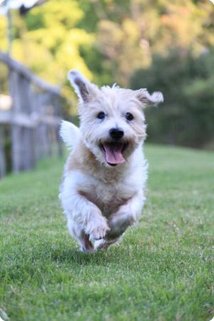dog boarding kennels gold coast