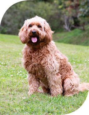 dog kennels gold coast