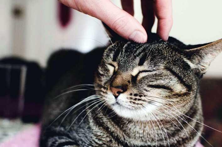 Class cat care