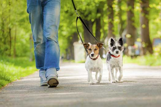 Training two small dogs