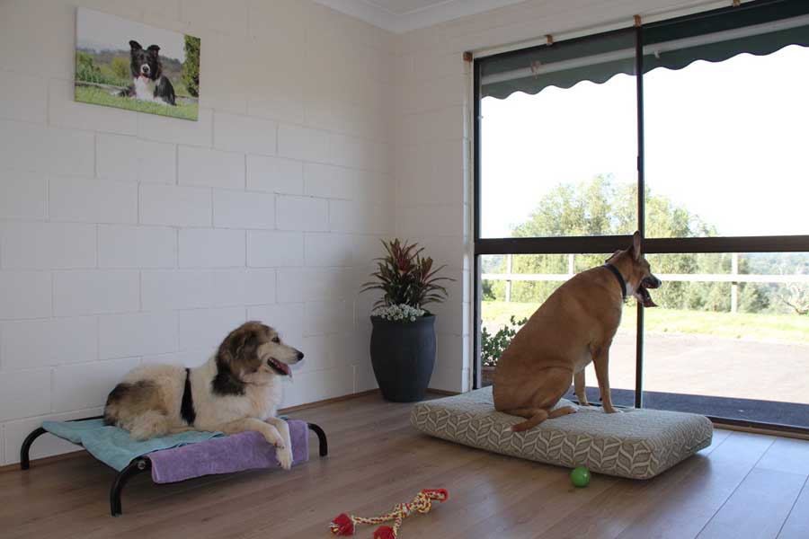 pet resort gold coast