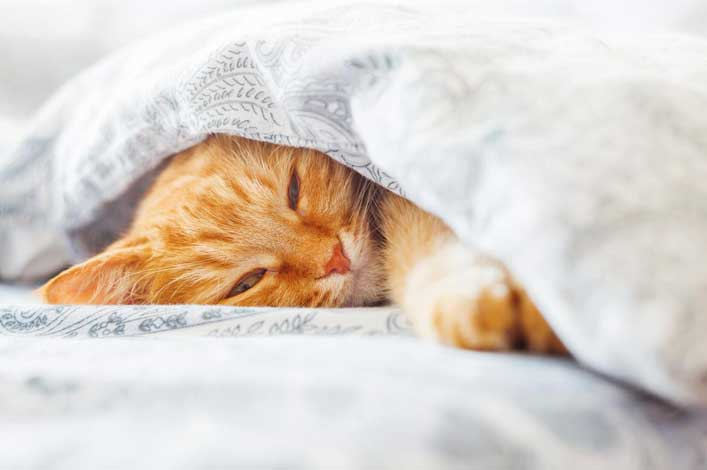 Cat in bedding