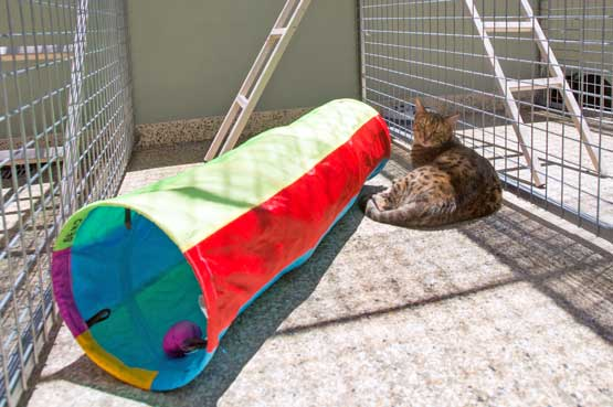 Cat in our cattery