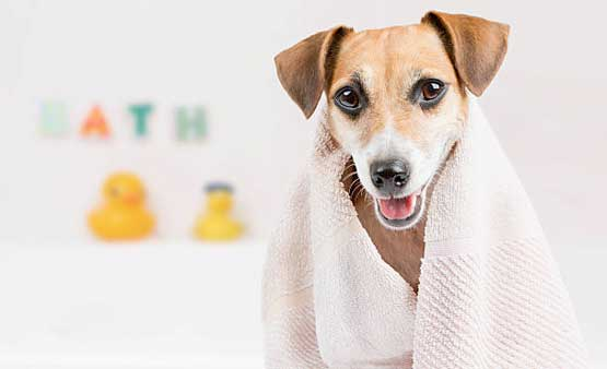 Dog grooming gold coast clipping midtown pet centre bathing and hydrobathing solutioingenieria Images