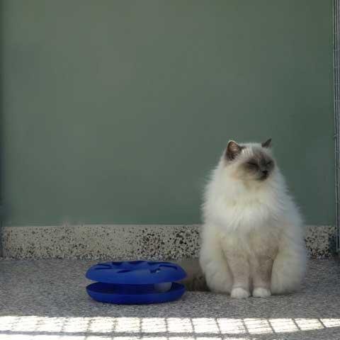 cat care gold coast