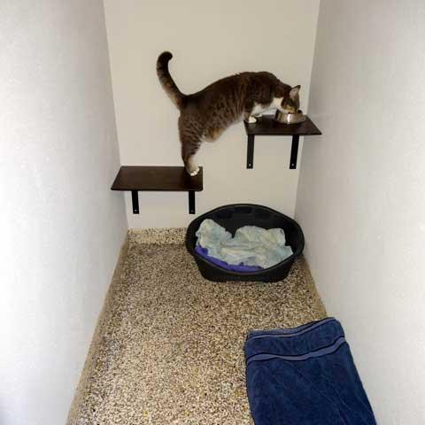 Special cat care