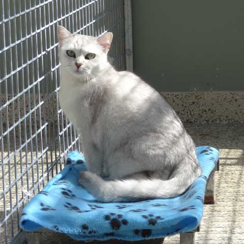 Luxury Gold Coast Cattery