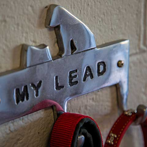 My Lead