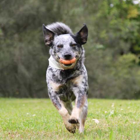 Medium Dogs Training