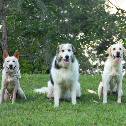 dog leisure zone