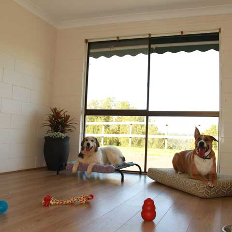 Dogs Boarding Accommodation