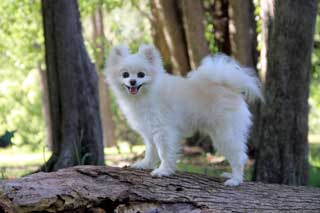 Small dog on a tree
