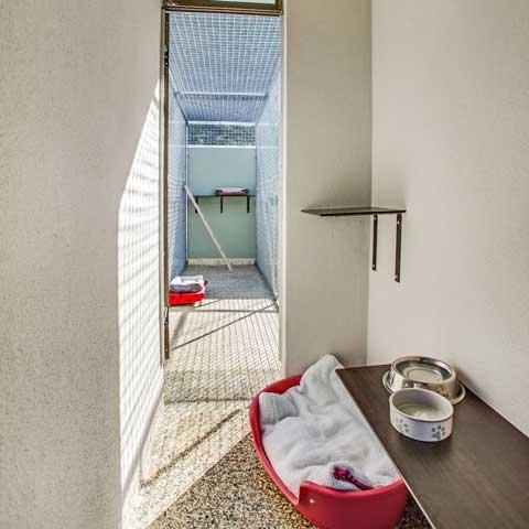 Luxury Gold Coast Pet Accommodation